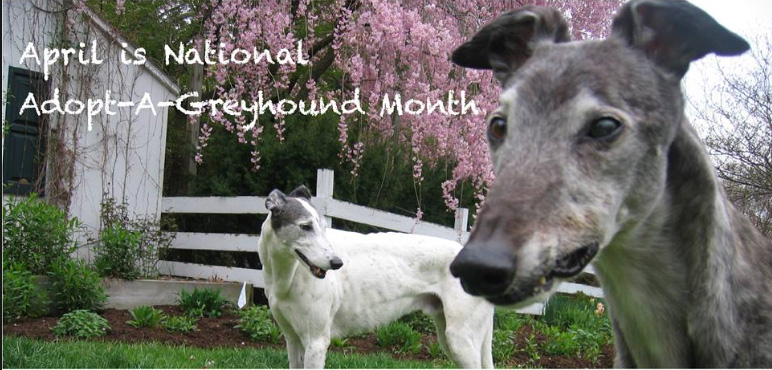 Adopt-A-Greyhound Month cover photo