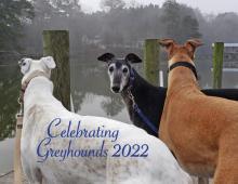 2022 Celebrating Greyhounds Wall Calendar